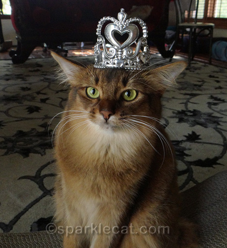 somali cat wearing a tiara