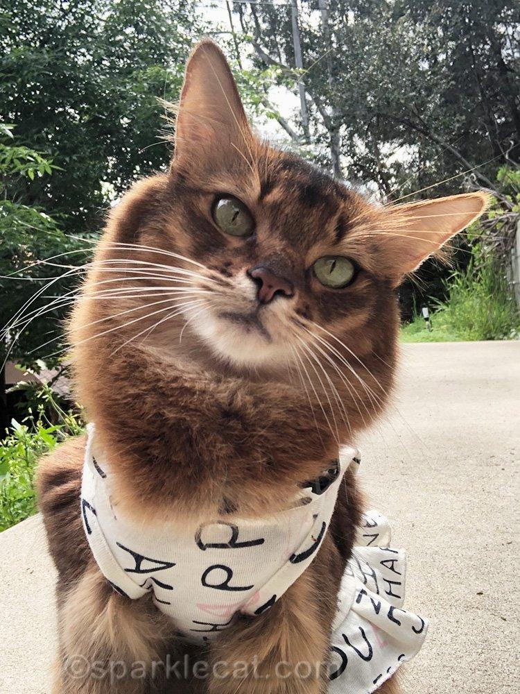 somali cat selfie with head tilt