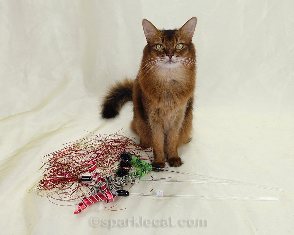 Summer judges the cat toy winners and losers from a recent photo session