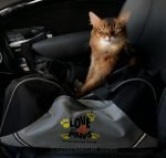 Although Summer continues to do therapy cat visits, her human takes extra precautions protecting the seniors during the spread of the coronavirus.