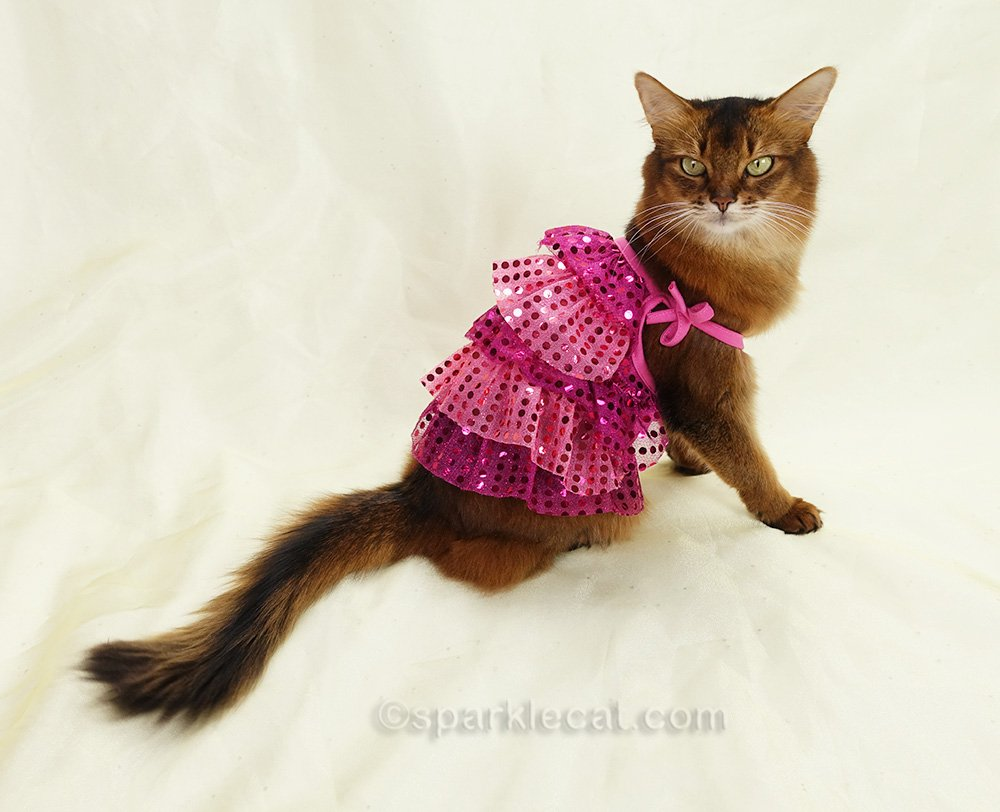 Somali cat wearing 1920s style pink dress