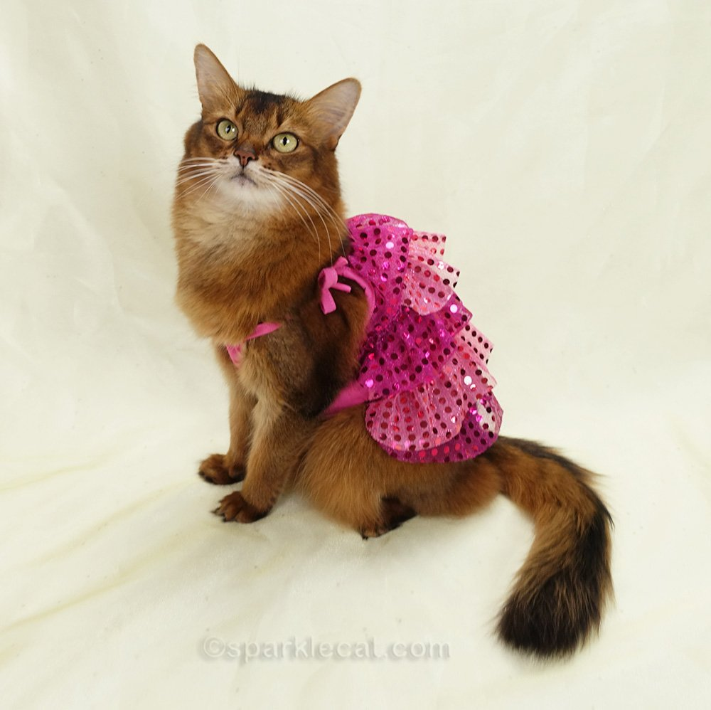 somali cat in flapper dress from another angle