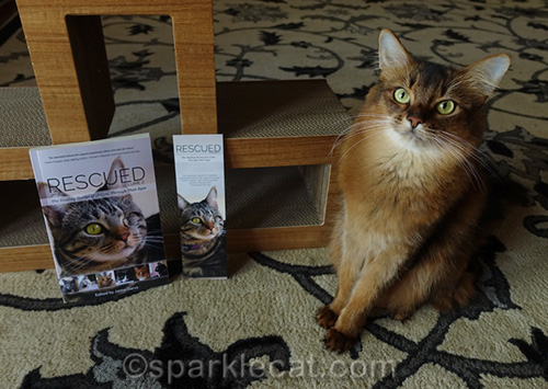 somali cat with copy of Rescued Volume 2 and a bookmark