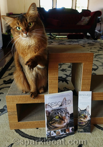 somali cat with beckoning paw and copies of Rescued Volume 2