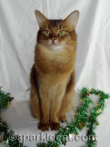 Somali cat posing with green garland