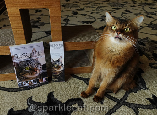 somali cat with tongue out posing with book and bookmark
