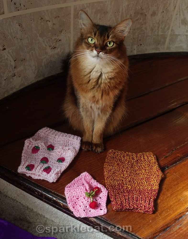 Somali cat with crocheted sweaters and a scarf