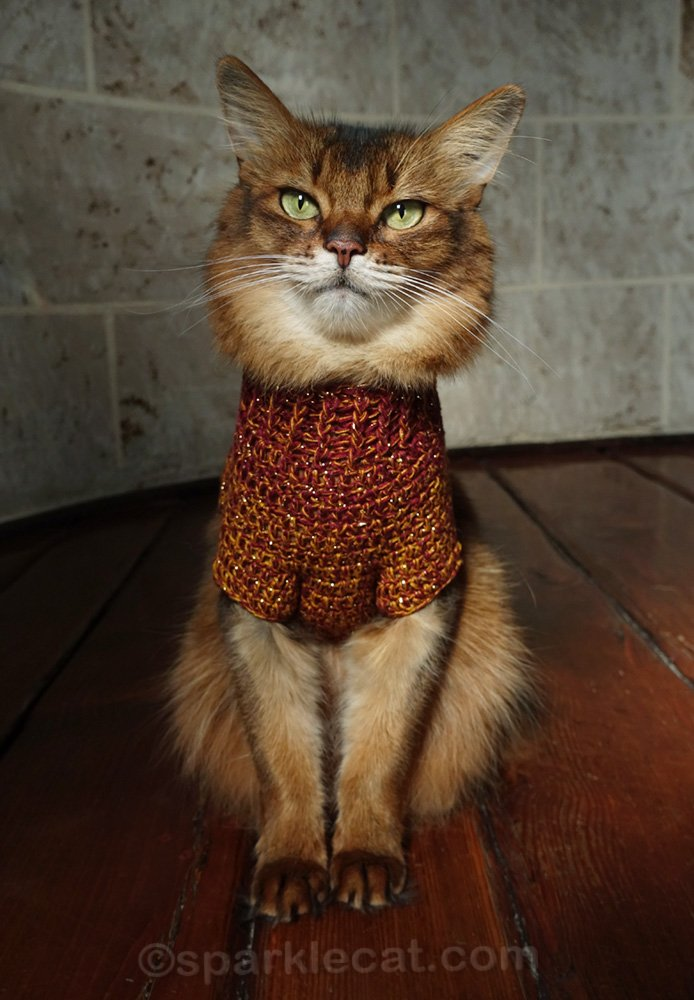 somali cat with reddish brown knit sweater