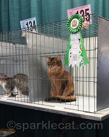 I like to pose in the judging cage