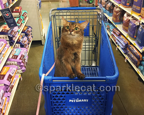 somali cat in Petsmart shopping cart