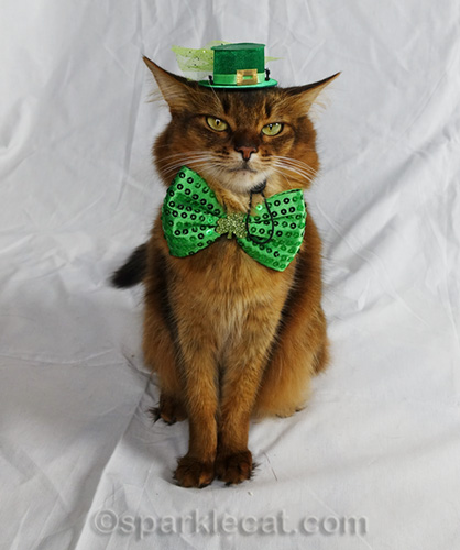 Somali cat in St. Catrick's Day hat and bowtie