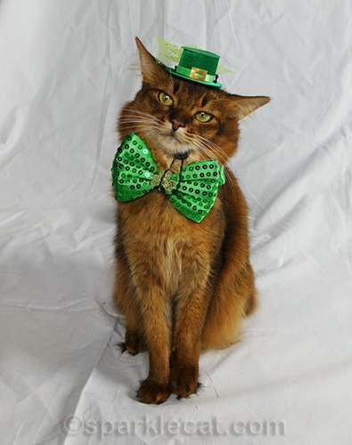 somali cat in St. Catrick's Day hat and bowtie looking coy