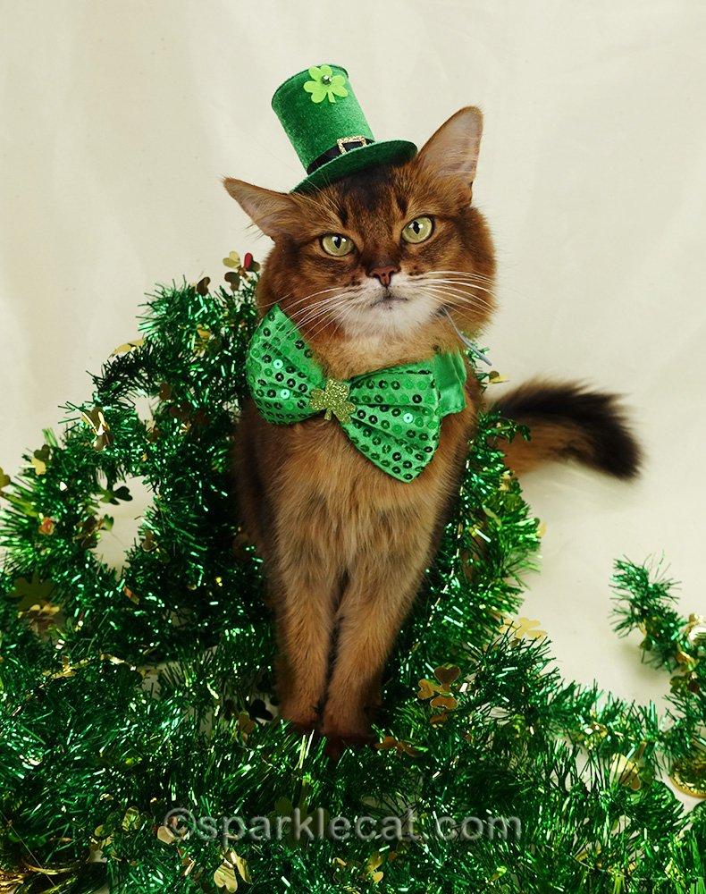 somali cat posing for St. Catrick's Day