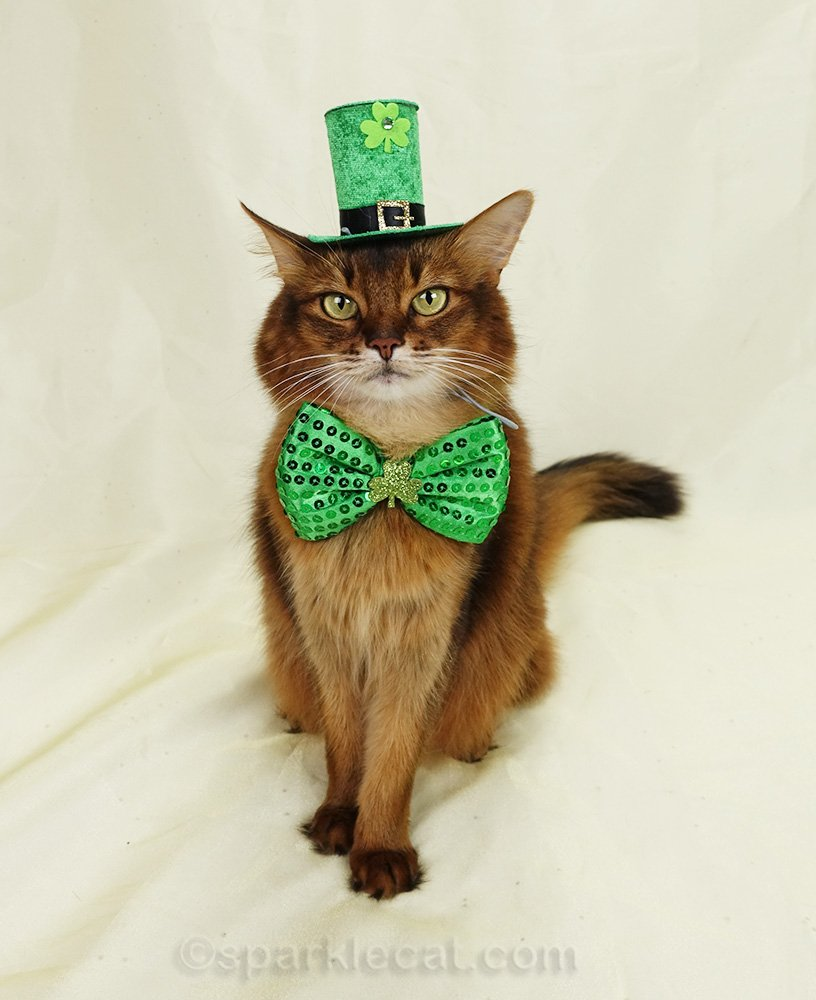somali cat wearing St. Patrick's Day hat and bow tie