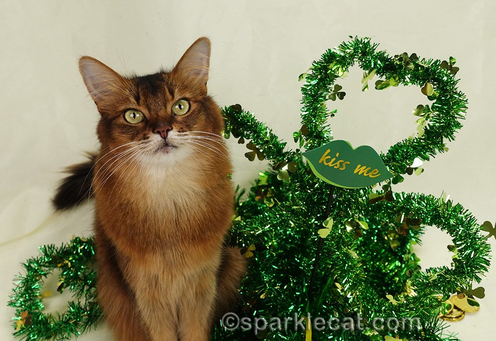 somali cat posing with St. Patrick's Day stuff, including a Kiss Me prop