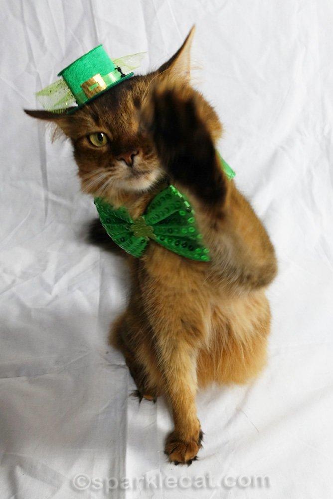 somali cat in St. Patrick hat, having off the paparazzi