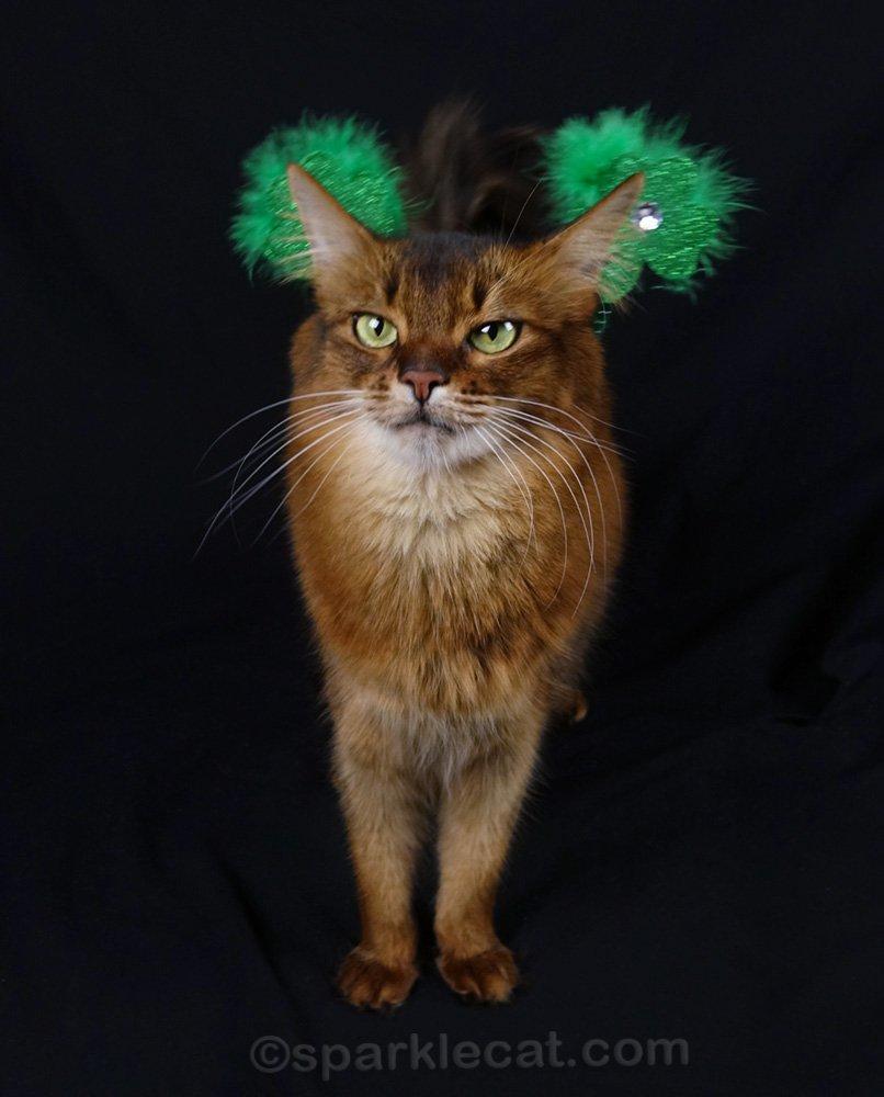 somali cat wearing St. Patrick headband around her back