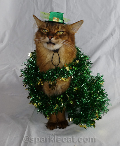 somali cat wrapped in St. Patrick's Day garland
