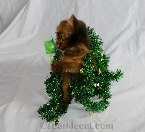 somali cat removing St. Catricks Day hat