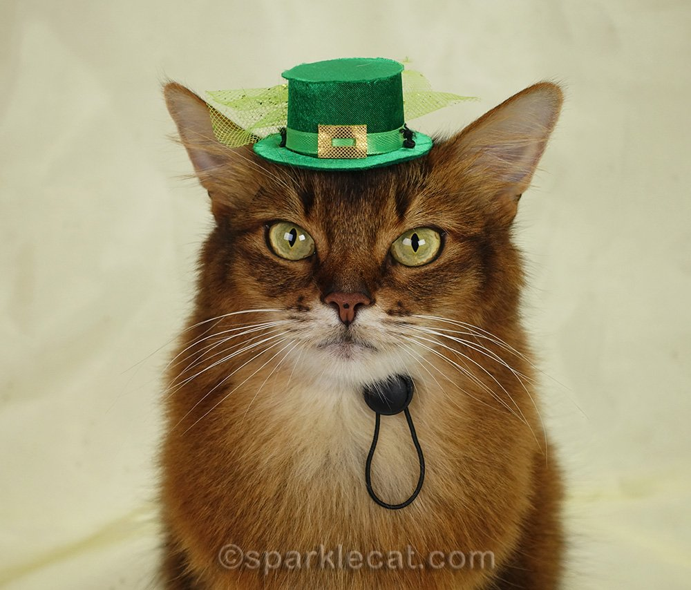 somali cat wearing tiny St. Patrick's Day hat