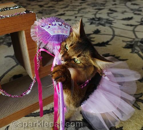 somali cat playing with birthday princess wand