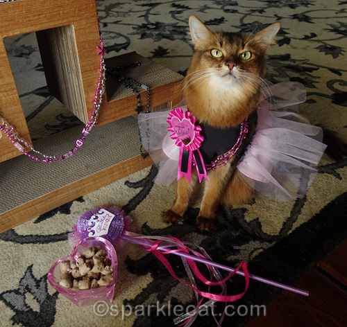 somali cat with birthday appetizers