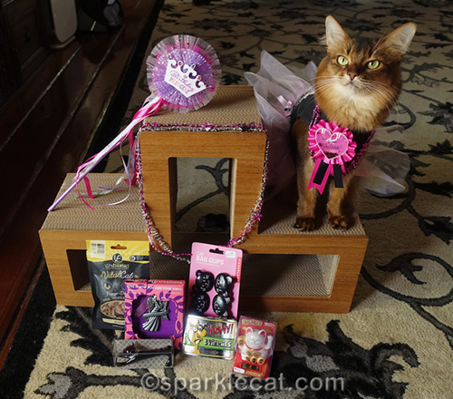 somali cat with giveaway prizes