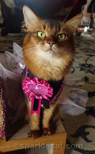 Happy somali cat birthday girl