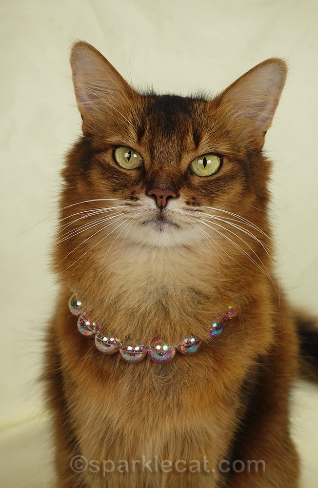 somali cat wearing pink sparkly necklace
