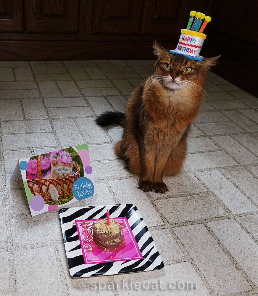 somali cat with birthday card and cat cake