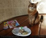 somali cat with birthday decoration and cat food cake
