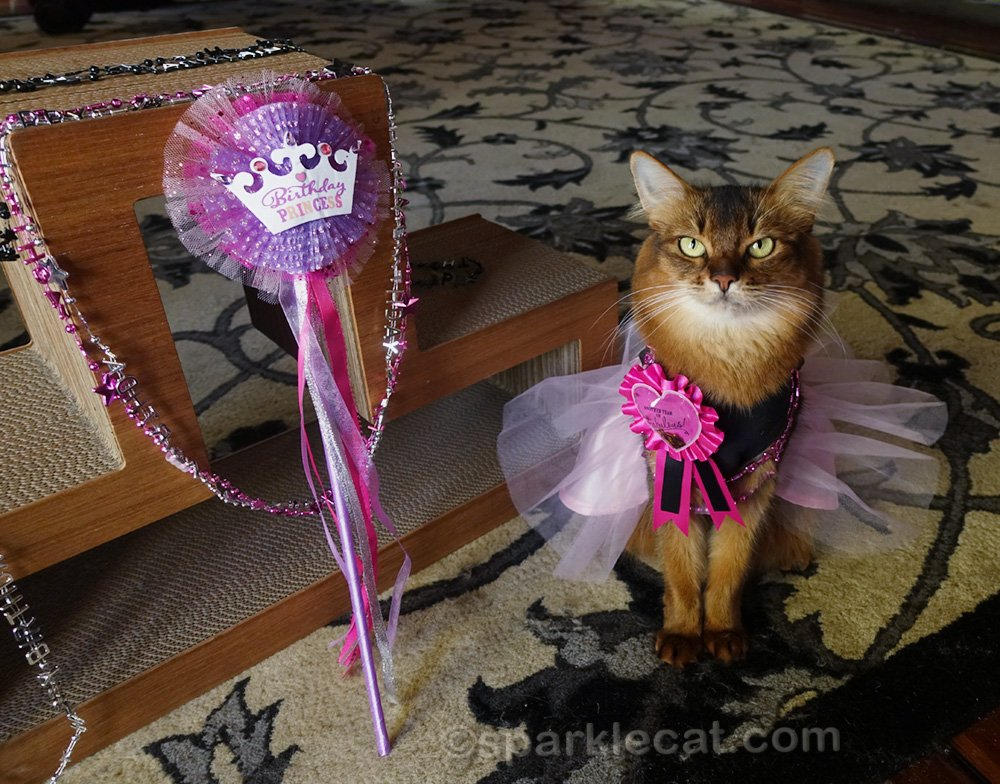 Summer takes a birthday flashback look at 2018, when she had a party... and Binga thought it was all about her.