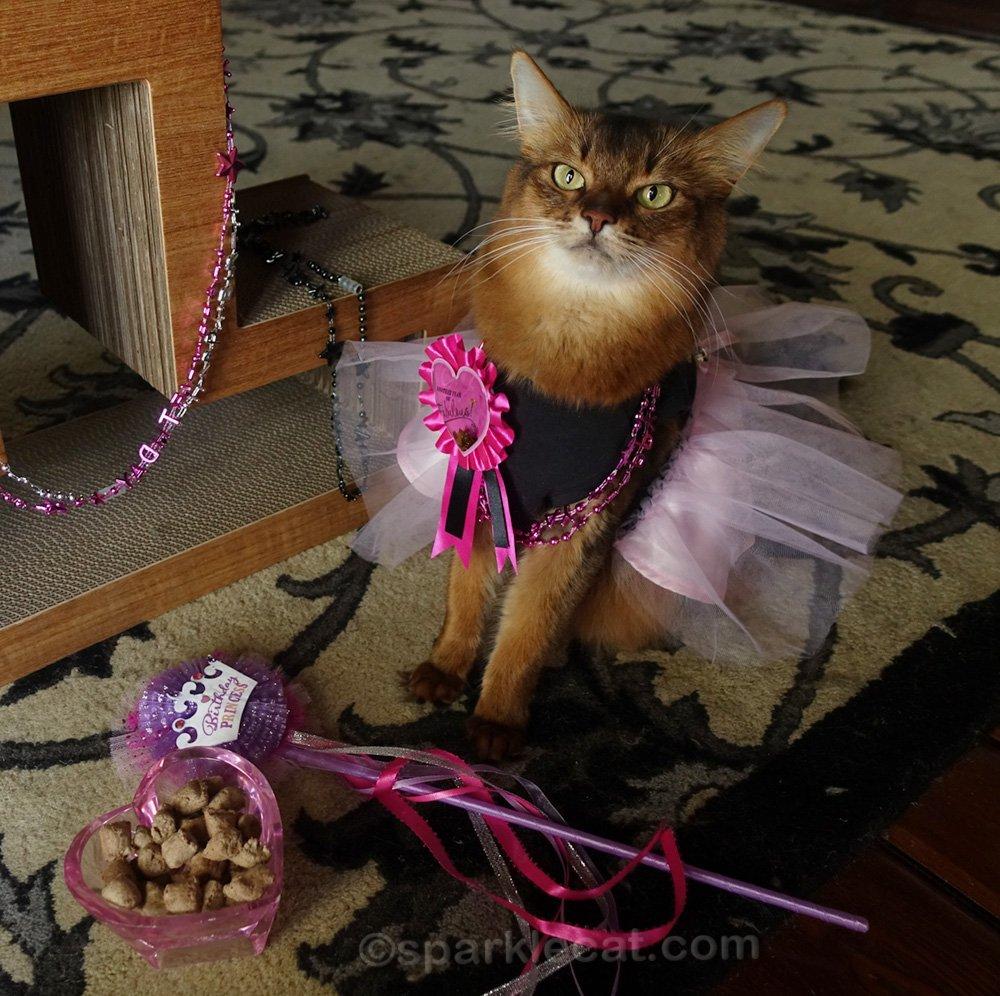 somali cat with birthday princess wand and cat treats