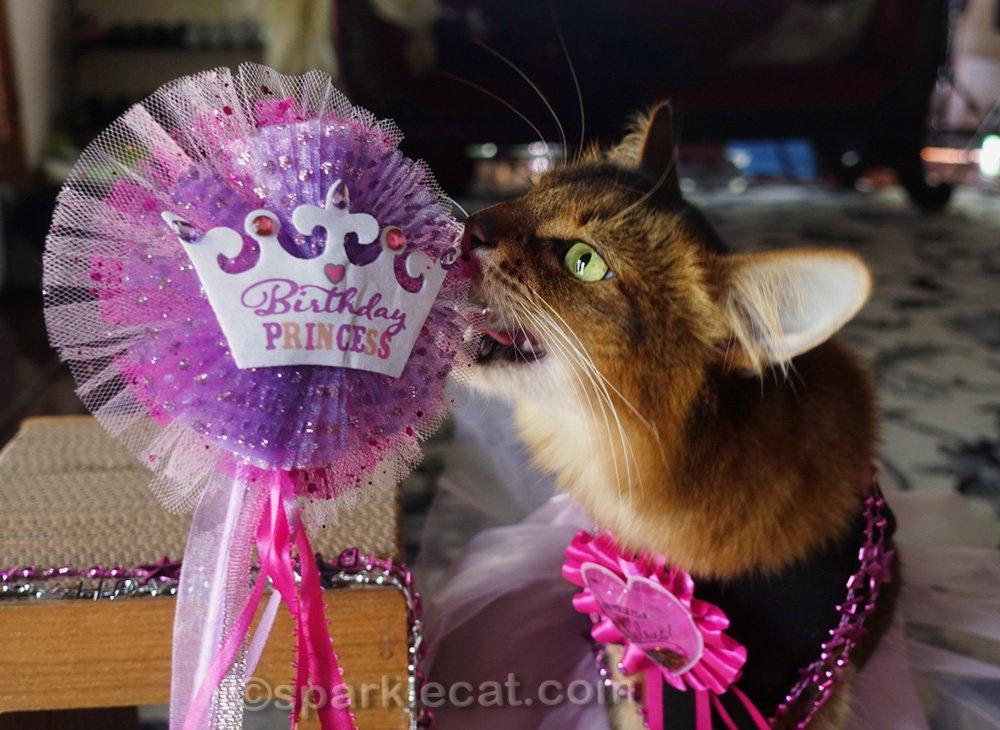 somali cat wanting to chew on her birthday princess wand
