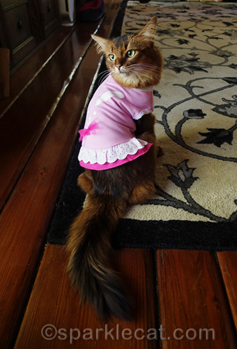 somali cat showing off back of pink easter dress