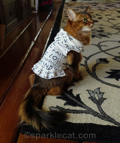 somali cat showing off side view of ED by Ellen hoodie