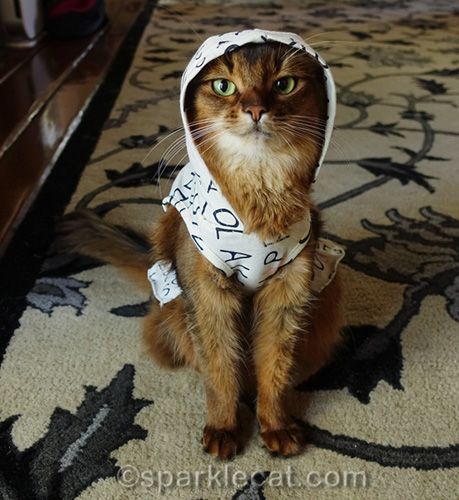 somali cat wearing ED dress with hood over her head