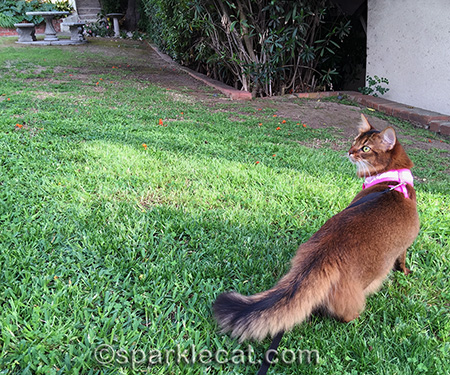 Someday, birdie, I WILL get you!