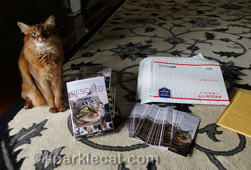 somali cat helping to ship copies of Rescued Volume 2