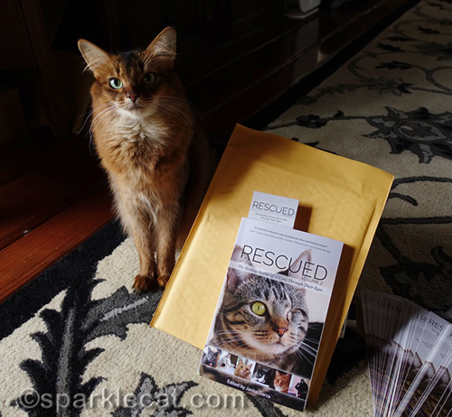 somali cat posing with copy of Rescued Volume 2 for giveaway winner