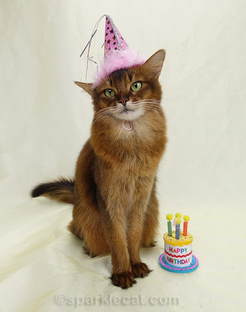 Summer's human is trying to get the perfect shot of her for a birthday card.