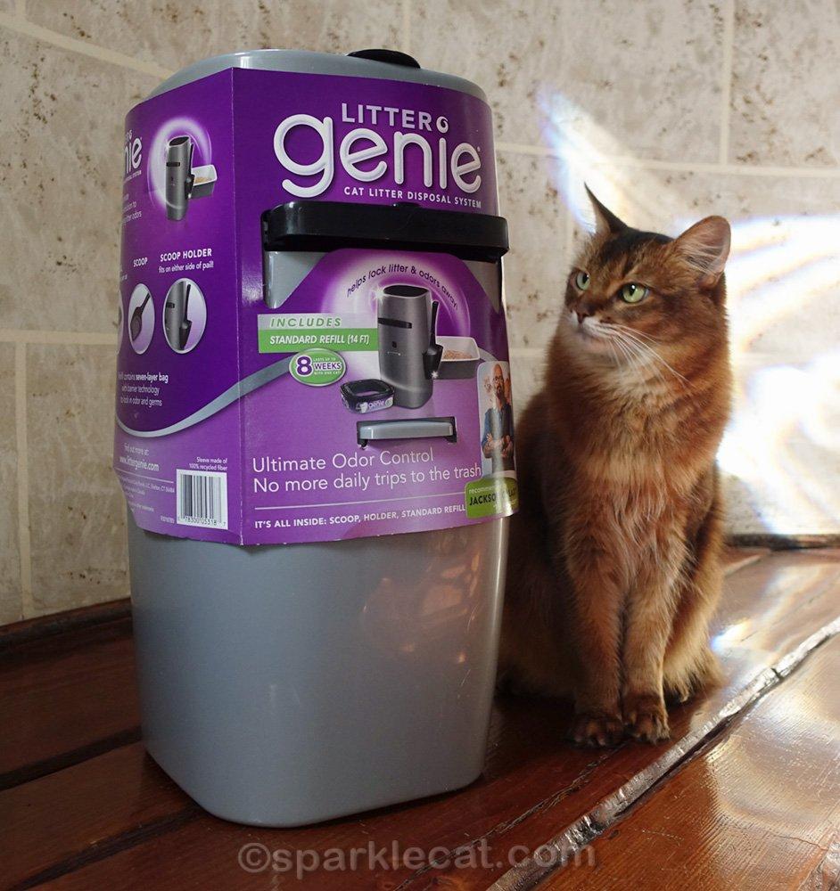 somali cat looking at Litter Genie