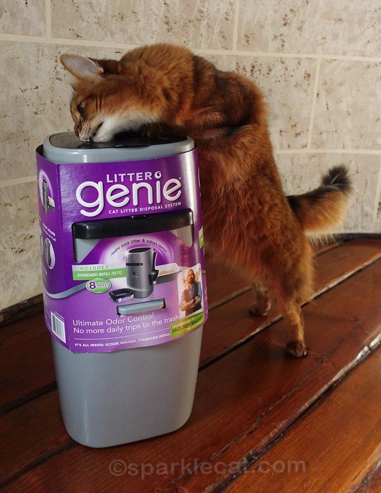 somali cat eating treat off of Litter Genie