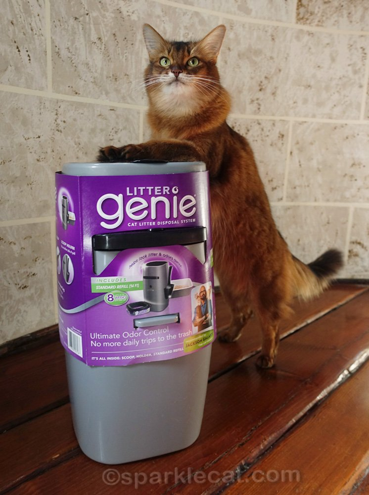 somali cat posing with paws on top of Litter Genie