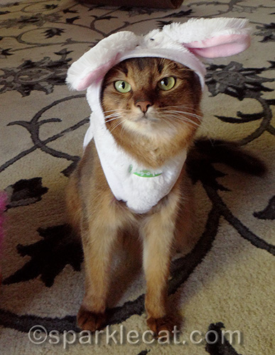 somali cat in easter bunny costume