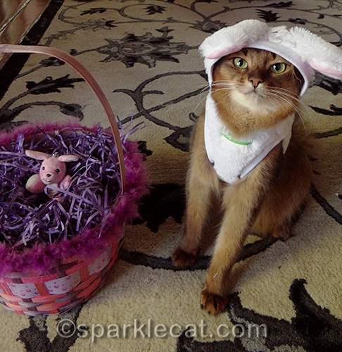 somali cat in bunny costume poses with easter basket with toy bunny