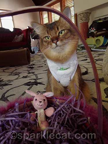 somali cat with easter basket and toy bunny