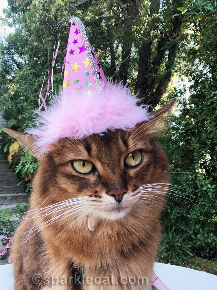 somali cat birthday selfie
