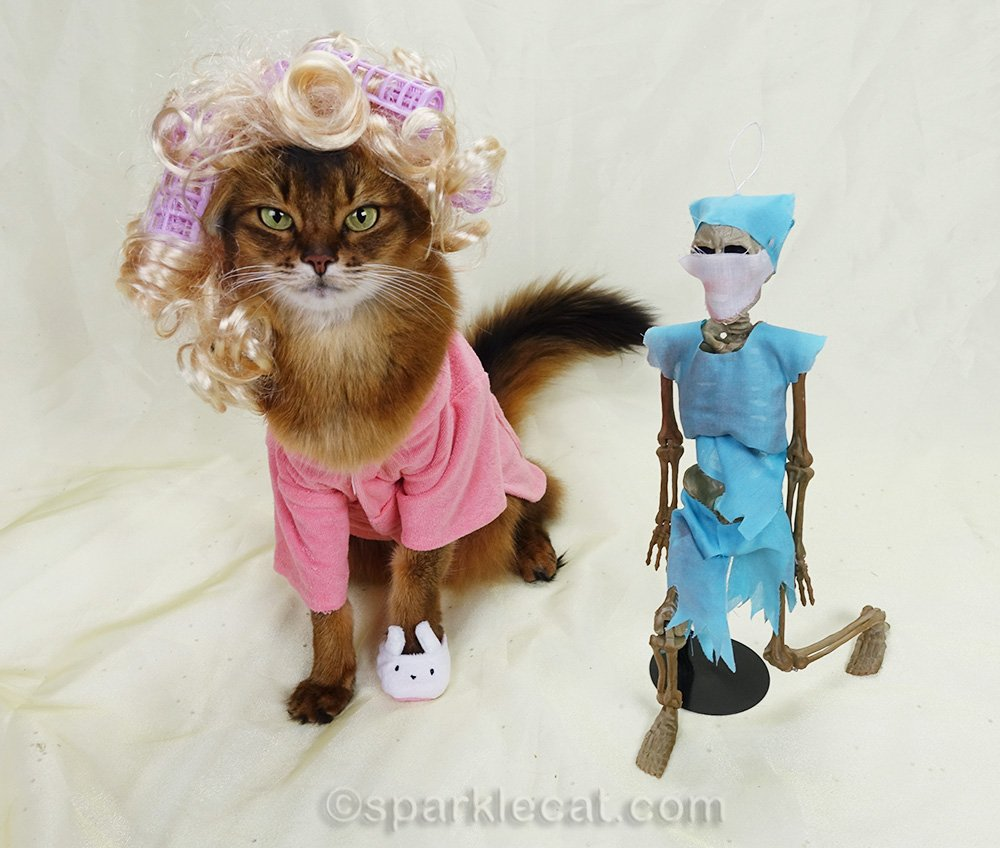 somali cat with doctor skeleton