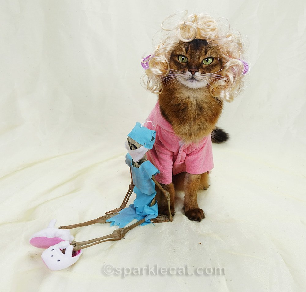 somali cat with doctor skeleton wearing bunny slippers